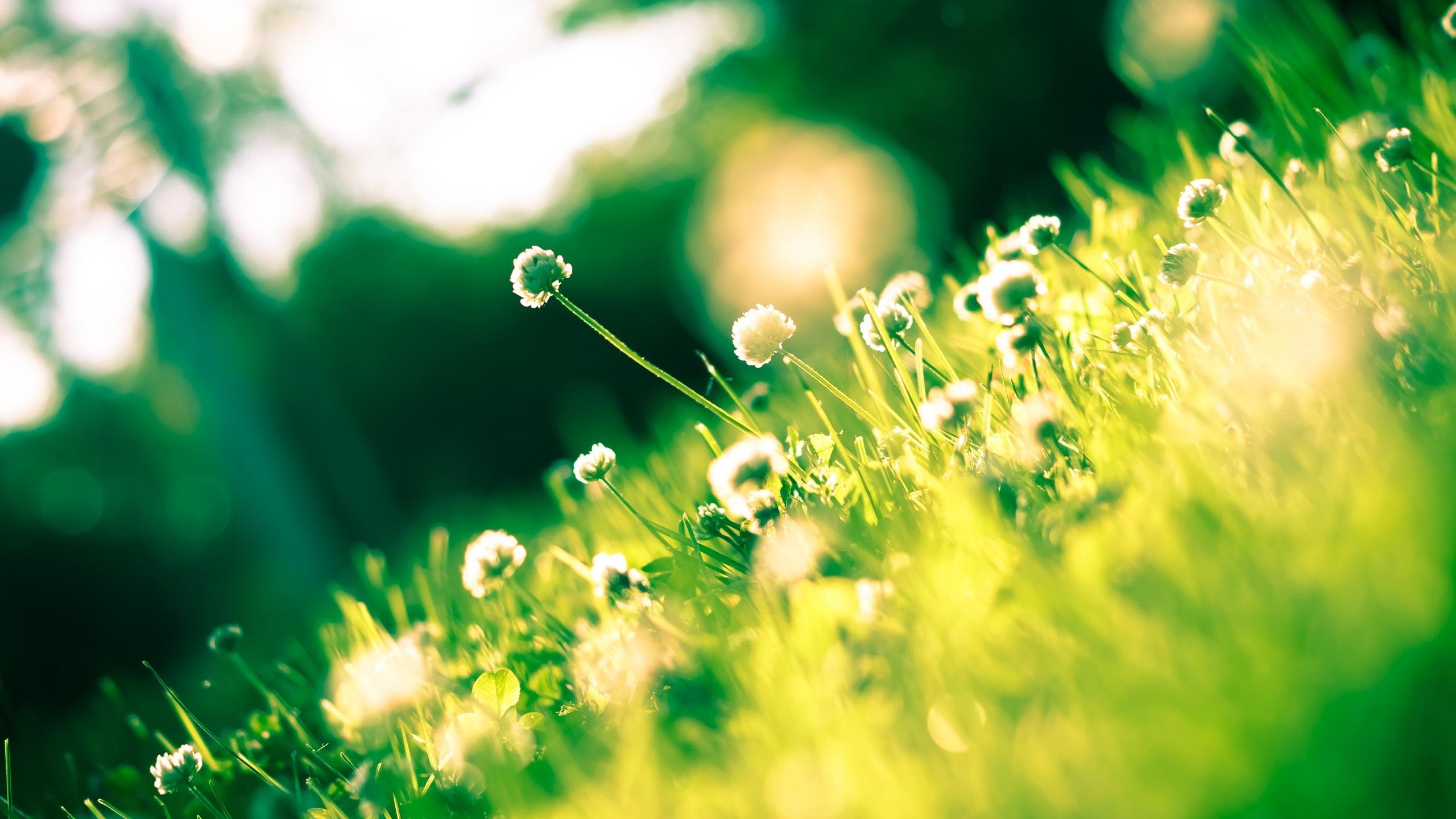 180 nouns words to describe spring