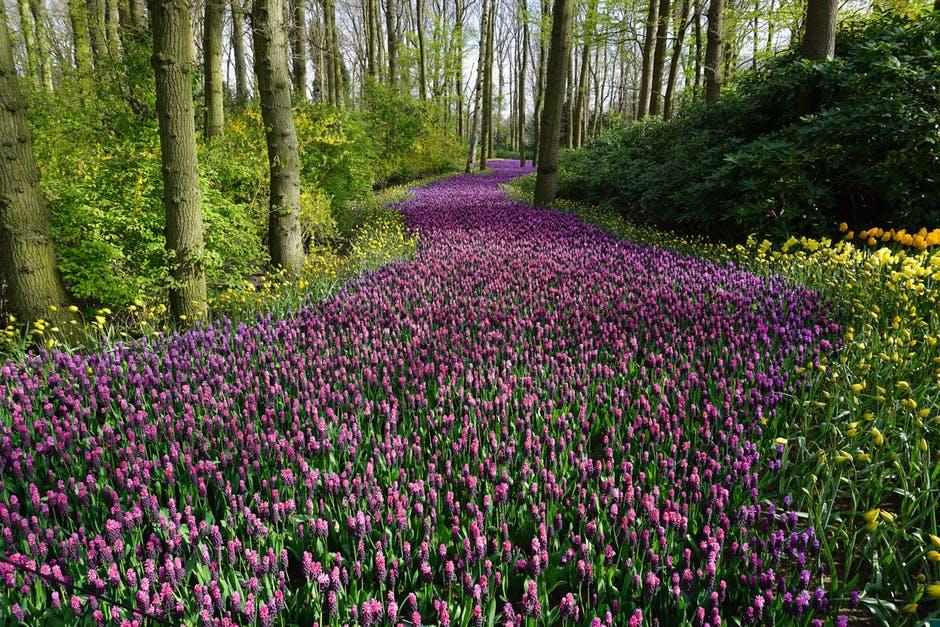 65+ verbs words to describe spring