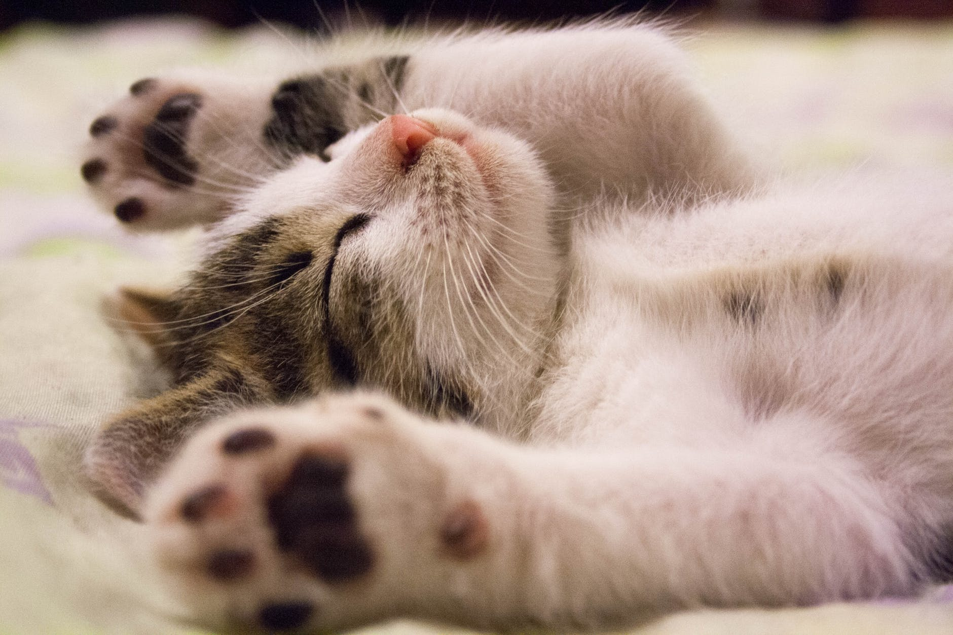 41 words to describe you cat breeds