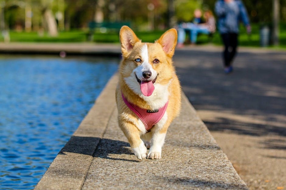 105 verbs word about Dogs