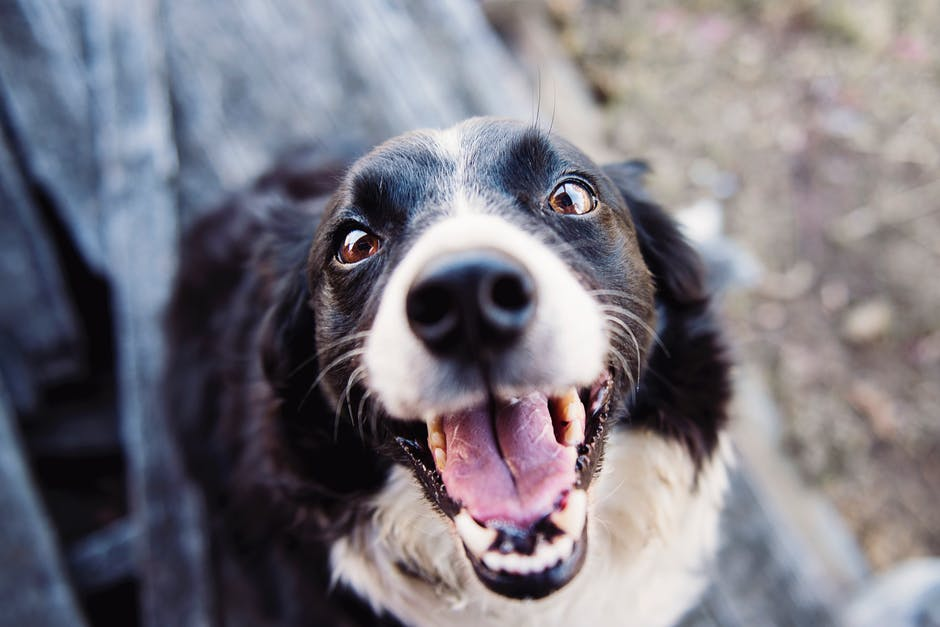 227 words to describe Dog breed